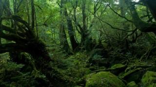 「森」と「林」の違いとは?