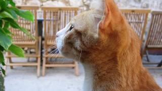 なぜ猫は肉食動物なのに魚が好きなのか?