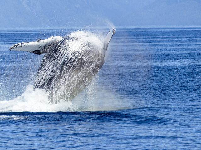 humpback-whale-431907_640