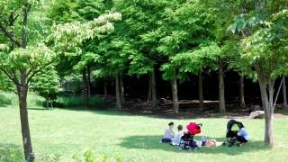 木陰が涼しいのは「日差しを遮るから」だけではない!?