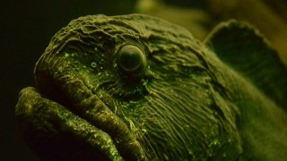 深海魚はなぜ強い水圧でもつぶれない?