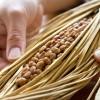 納豆1パックの中には500億個もの菌がいる!?