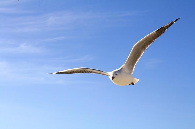 gull-456727_640