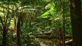 熱帯雨林がなくなると、地球の酸素もなくなる!?